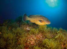 Det lilla havet – Murcia på spanska sydkusten