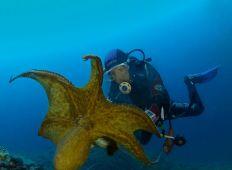 Kroatien – Medelhavets  vackraste skärgård