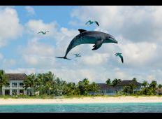 Delfiner, hajar och blå hål – storstilat på Bahamas