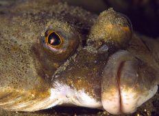 Djurlivet i badviken – det händer mer än du tror