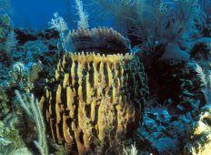 Från Speyside till Crown Point – Tobagos bästa dykning
