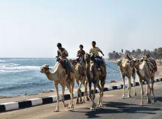 Dahab - CDWS presenterar: Röda Havet från norr till söder