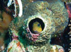 Följ med till Fundu – dykning på Pemba
