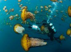Eric Börjesson – med fokus på undervattensvärlden