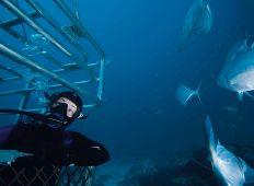 Det speciella med Rodney Fox Shark Expeditions är att hajburen inte bara hänger