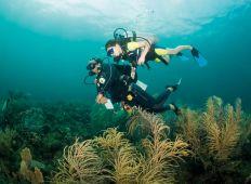 Barndykning – Persia lär sig dyka