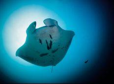 Thailands havsinvånare - en marinbiologisk uppdatering inför vinterns folkvandri
