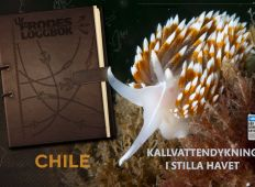 Ur Frodes loggbok – Chile