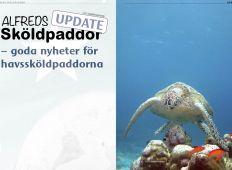 Alfreds sköldpaddor – update