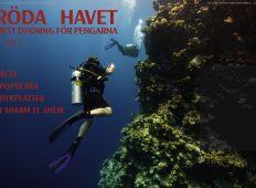 Åtta populära dykplatser i Sharm El Sheik – Röda Havet, del 2