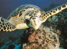 Maldiverna – Överlevnad och återhämtning