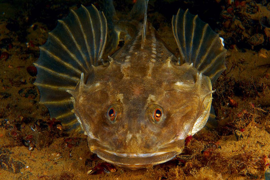 Närbild – Vinterns speciella fiskar