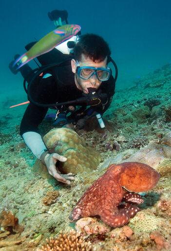 Valhaj, knölval och manta på Australiens västkust