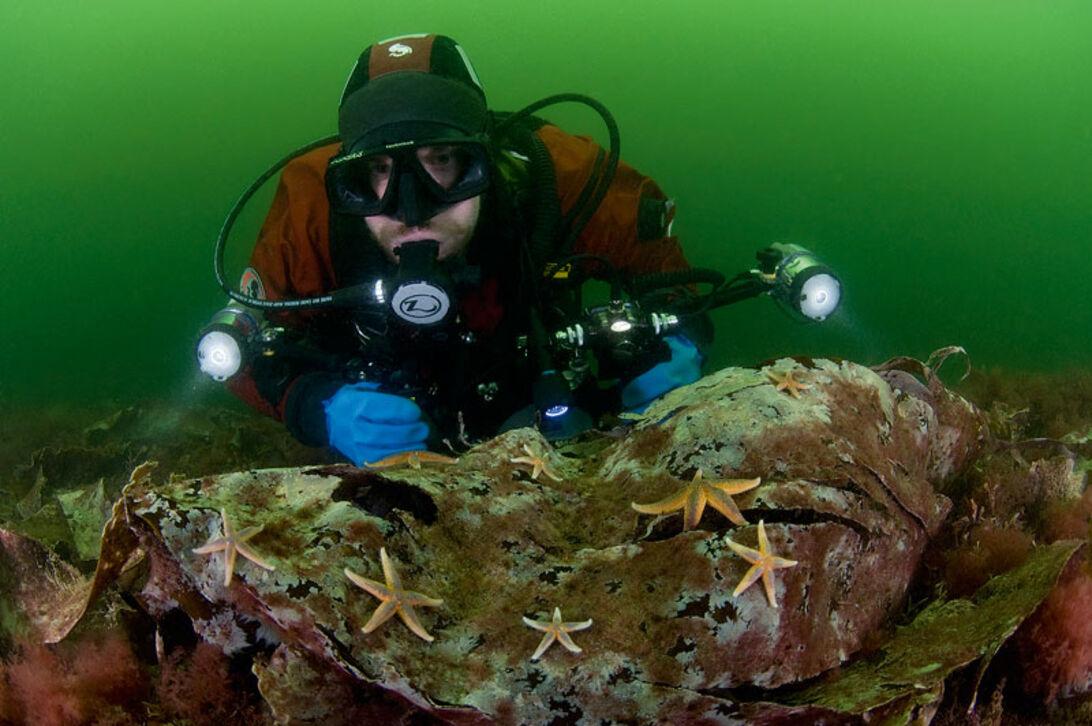 Kosterhavet  – Sveriges första marina nationalpark