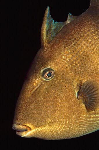 Närbild – Sydlige fiskearter