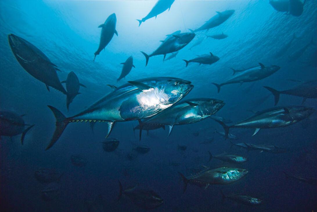Silvertornado – bland tonfisk på Malta