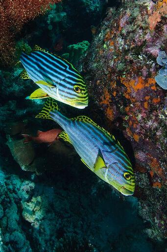 Mantastisk! – på atollsafari i Maldiverna