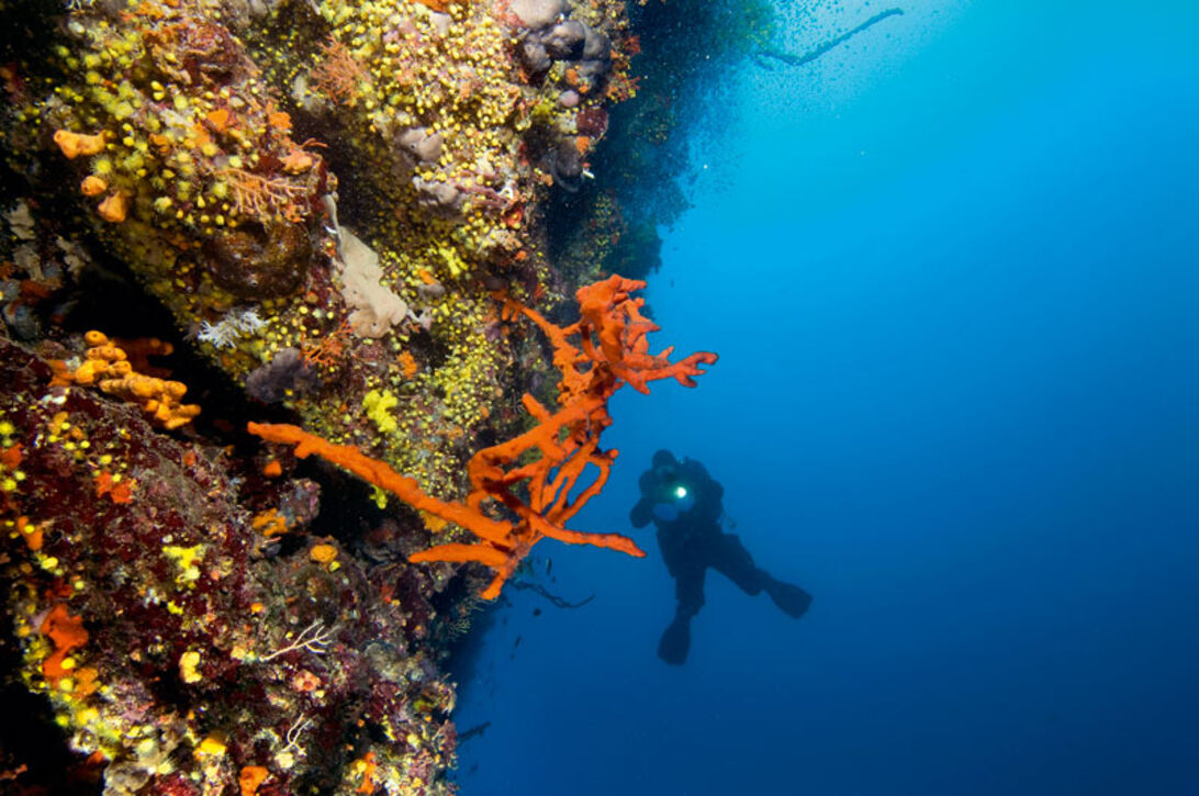 Det ukendte Kroatien – dykning ved Dogi Otuk
