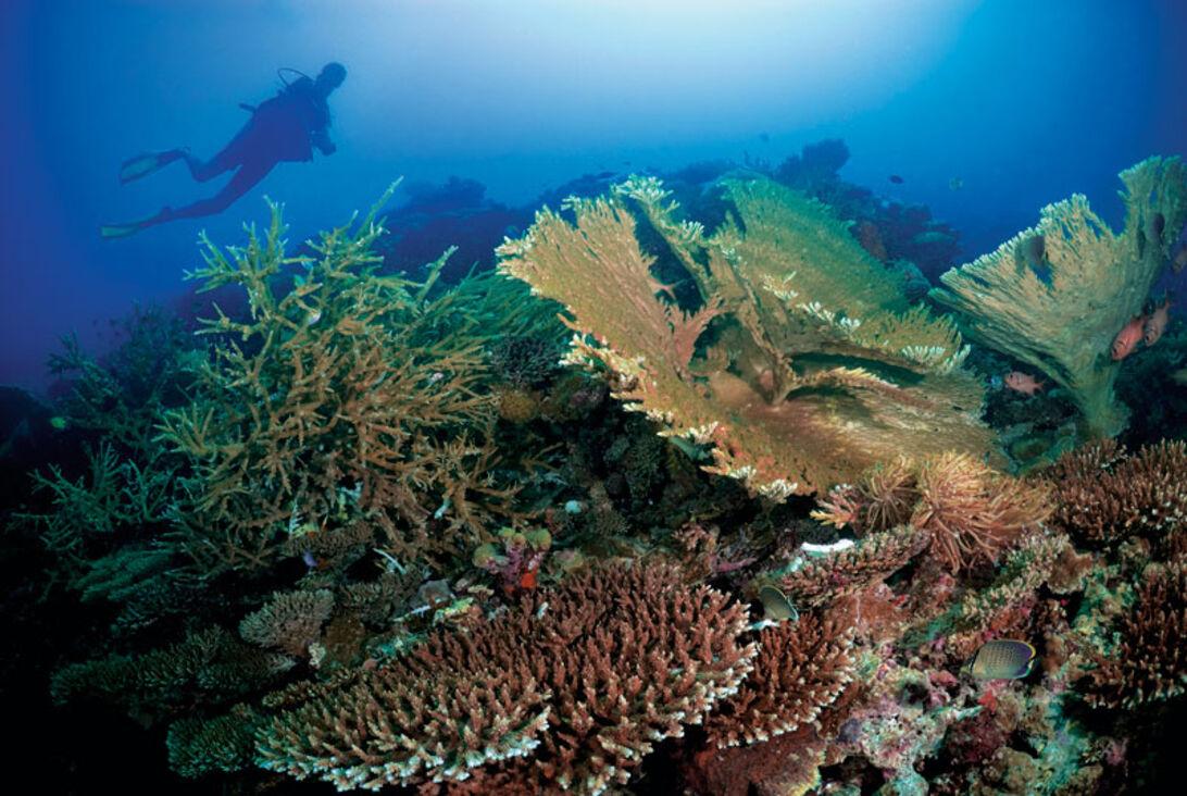 Dykning i gräddfil – maximal lyx på Maldiverna