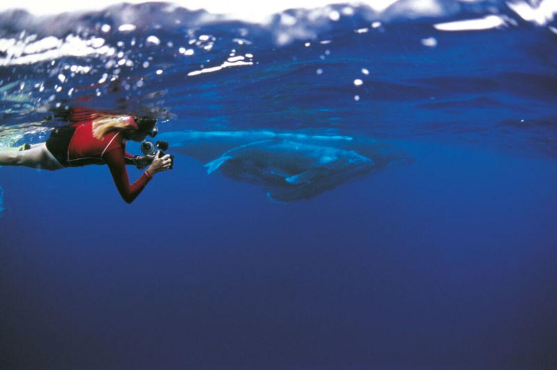 Simma med jättar – möte med Tongas knölvalar