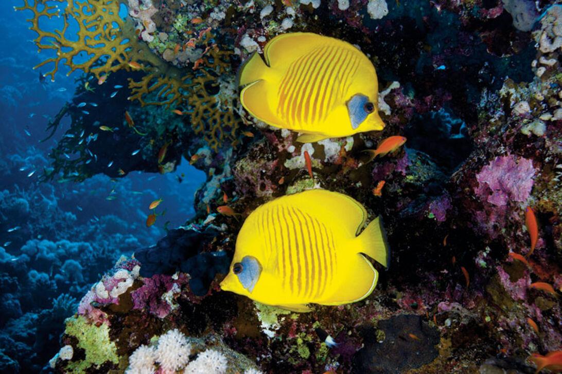 Sex dagar i öknen - dykning i södra Egypten