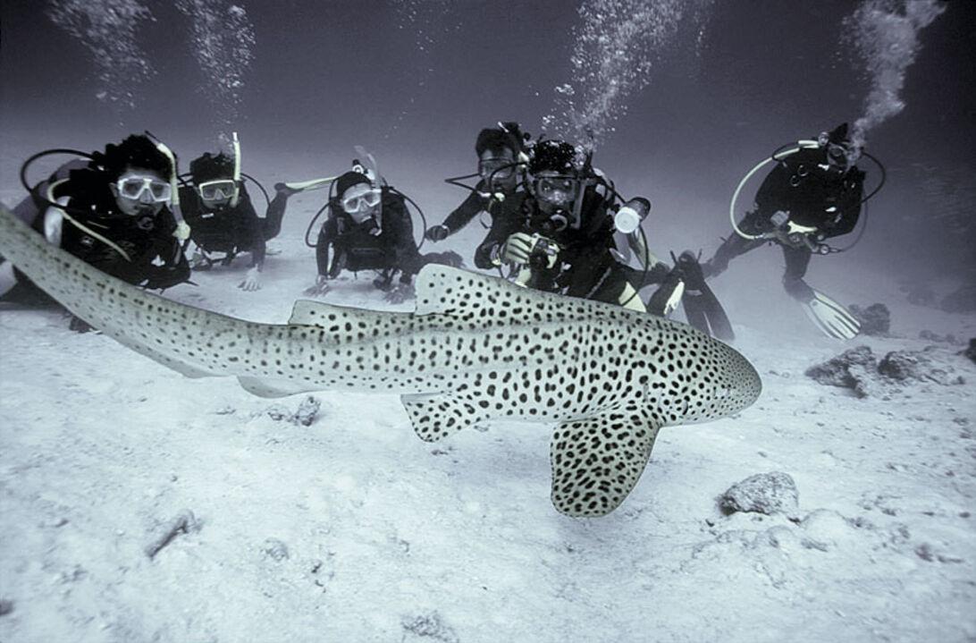 Thailands bästa dykområden – Krabi & Phi Phi