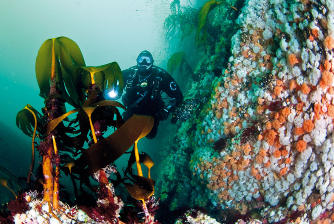 Saltstraumen – dykning med tidtabell