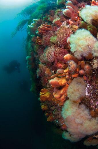 Lofoten – Dykning i tareparadiset
