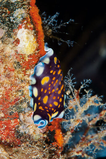 Malapascua –Filippinernas pärla