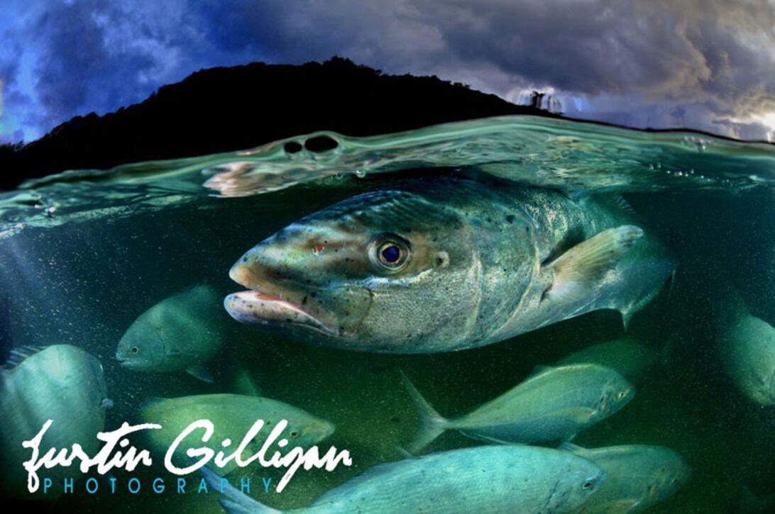 Justin Gilligan – Fotograferande forskare