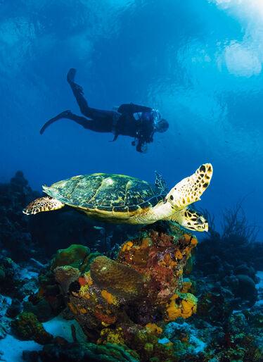 ABC-öarna – Aruba, Bonaire och Curaçao