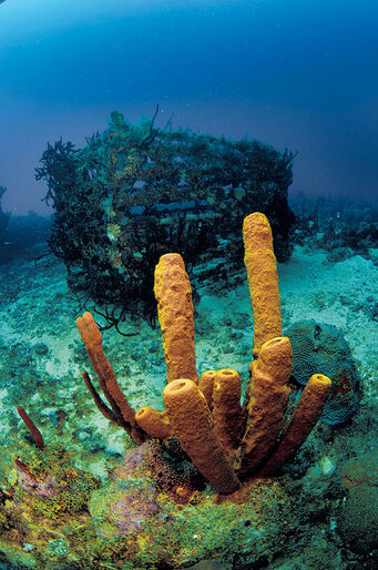 Dominikanska republiken – grottor, valar och koraller