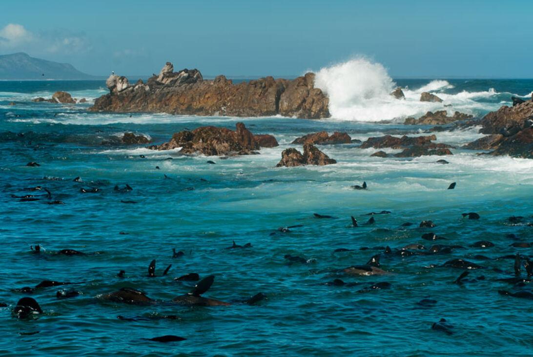 Sydafrika – ett äkta dykäventyr!