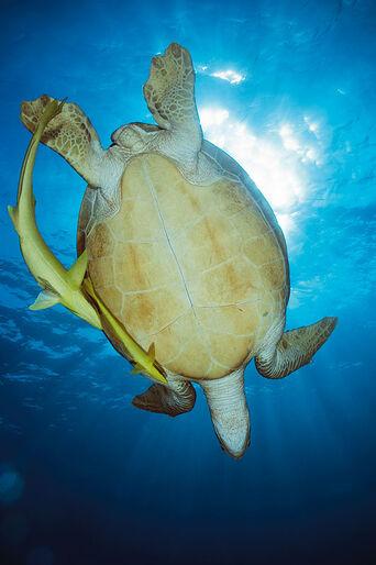 Malaysia – Där regnskog och korallrev möts!