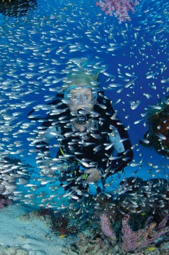 Similan öarna − fortfarande Thailands bästa dykplats