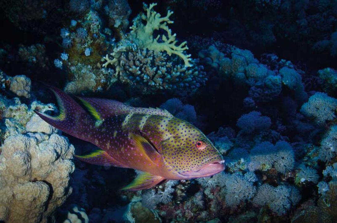Första fotoförsöken under vattnet – mycket att tänka på