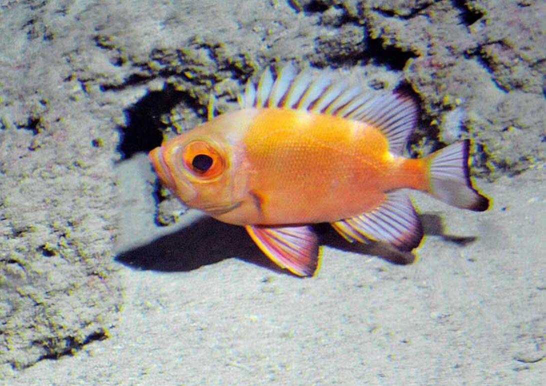 Dyk till 300 meter – aquanaut för en dag