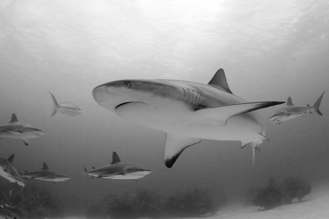 Jennie Soriano – passion för hajar