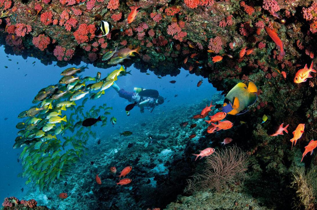Maldiverna – Fånga dagen