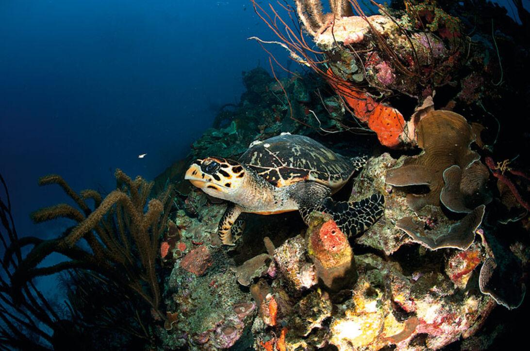 Bonaire – Ön där tarponerna möter dig i skymningen