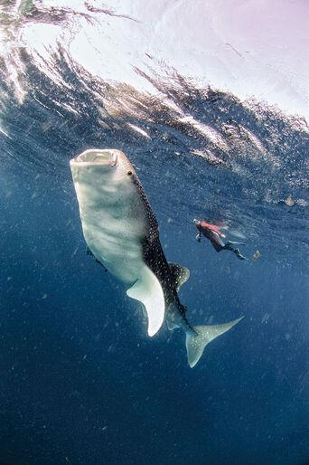 TOPP 10 – dyk med stoora djur