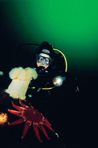 SM i undervattensfoto 2004