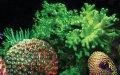En lysande upptäckt – fluorescerande rev i Indonesien