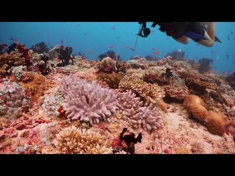 Dykning ved Kudarah Thila, Maldiverne. Video: Graeme_A