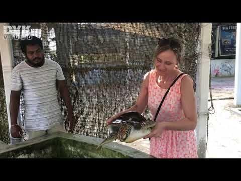 sköldpaddorna, nykläckta sköldpaddorna och Sea Turtle Hatchery