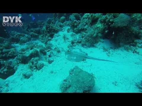 Tiransundet, Jackson Reef, december 2019. Video: Alex Resendorf