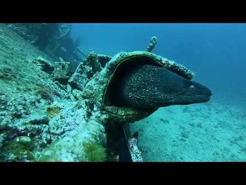 Teti Wreck diving. Video: Franek Przeradzki