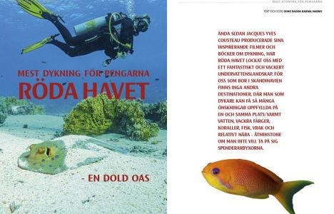 Mest dykning för pengarna – Röda Havet