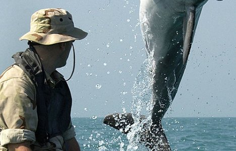 Delfiner användes vid Gulfkriget Foto: US Navy