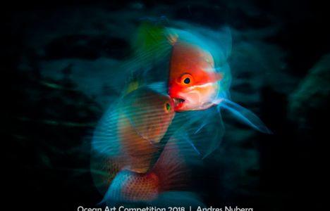 2:a plats I kategori Marine Life Behaviour - Anders Nyberg